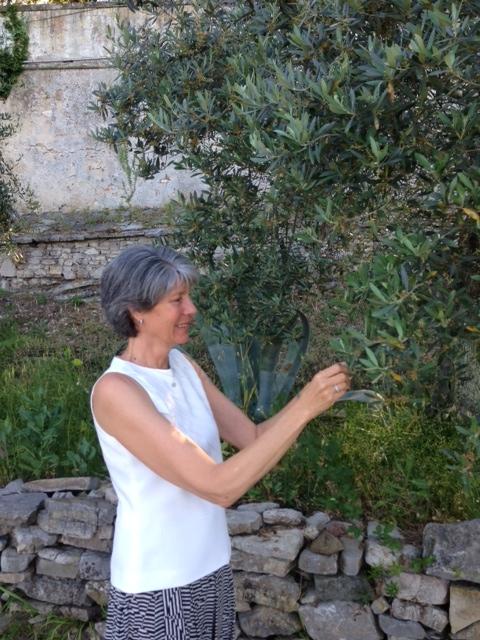 Author Lynn Rodolico examines an olive tree at Villa Arrigo. Photo by Trisha Thomas