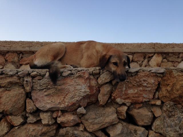 A stray dog snoozes in the port of Lampedusa. Photo by Trisha Thomas, November 12, 2014