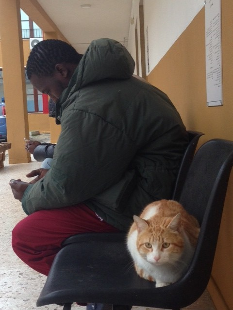"""A migrant sits near a cat and plays with his cell phone as he passes the time at the """"Umberto I"""" holding center in Siracusa, Sicily. Photo by Trisha Thomas March 24, 2015"""