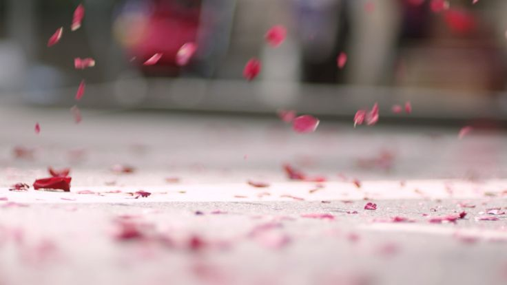 raining rose petals