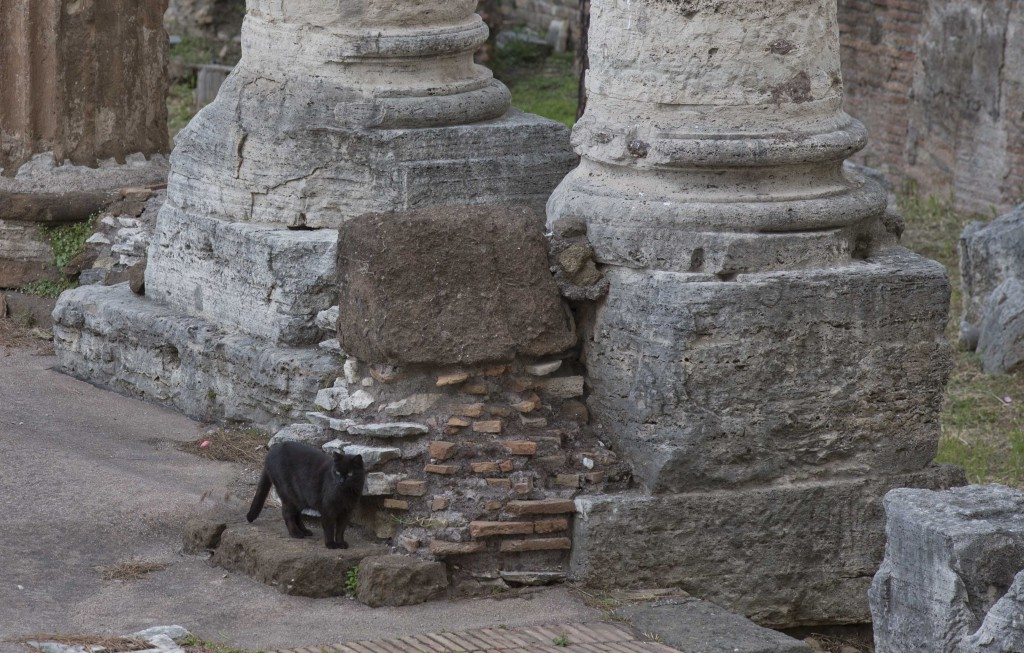 A black cat with green eyes wanders between the columns of an ancient Roman Temple behind which Julius Caesar was stabbed to death. The area is now a cat sanctuary. Photo by AP Photographer Alessandra Tarantino for Mozzarella Mamma. Rome, May 19, 2016